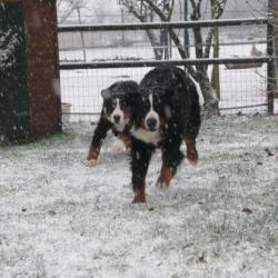 la neige arrive!!!!