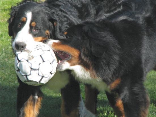 jeux de ballon