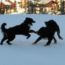 bud et balsane, aux sports d'hiver....